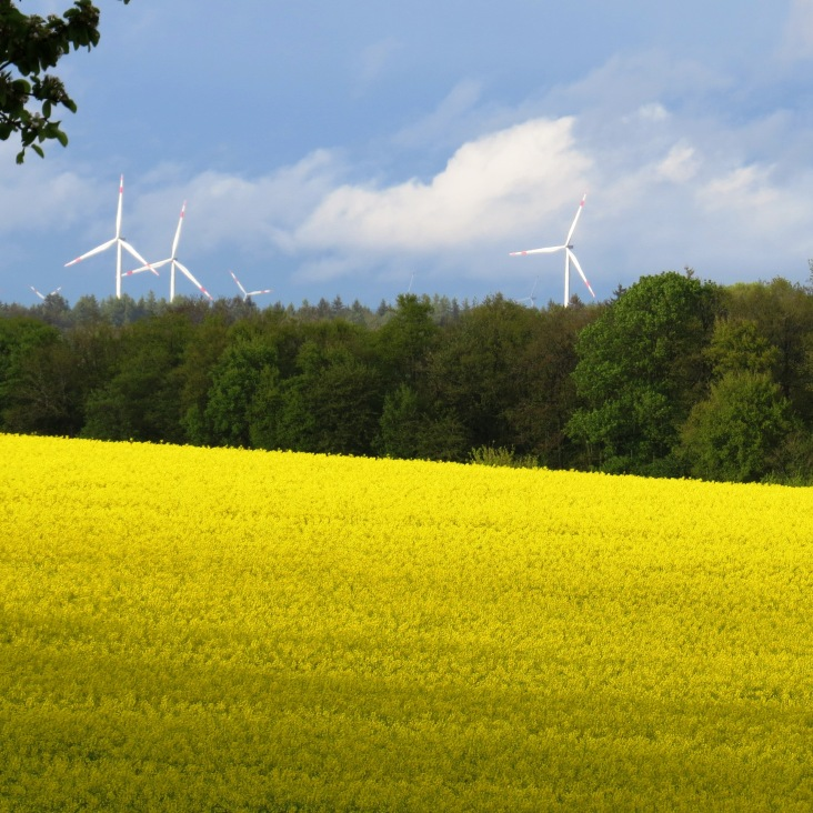Campos de colza (canola) e energia eólica