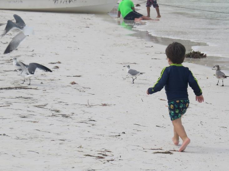 Correndo com as gaivotas