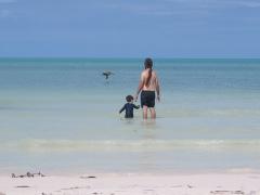 Observando o pelicano