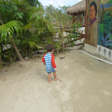 Tales fascinado com a iguana