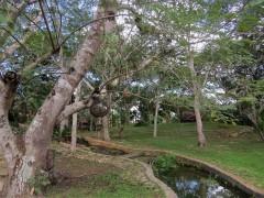Nascente de onde vem a pequena cascata que cai no cenote Saamal